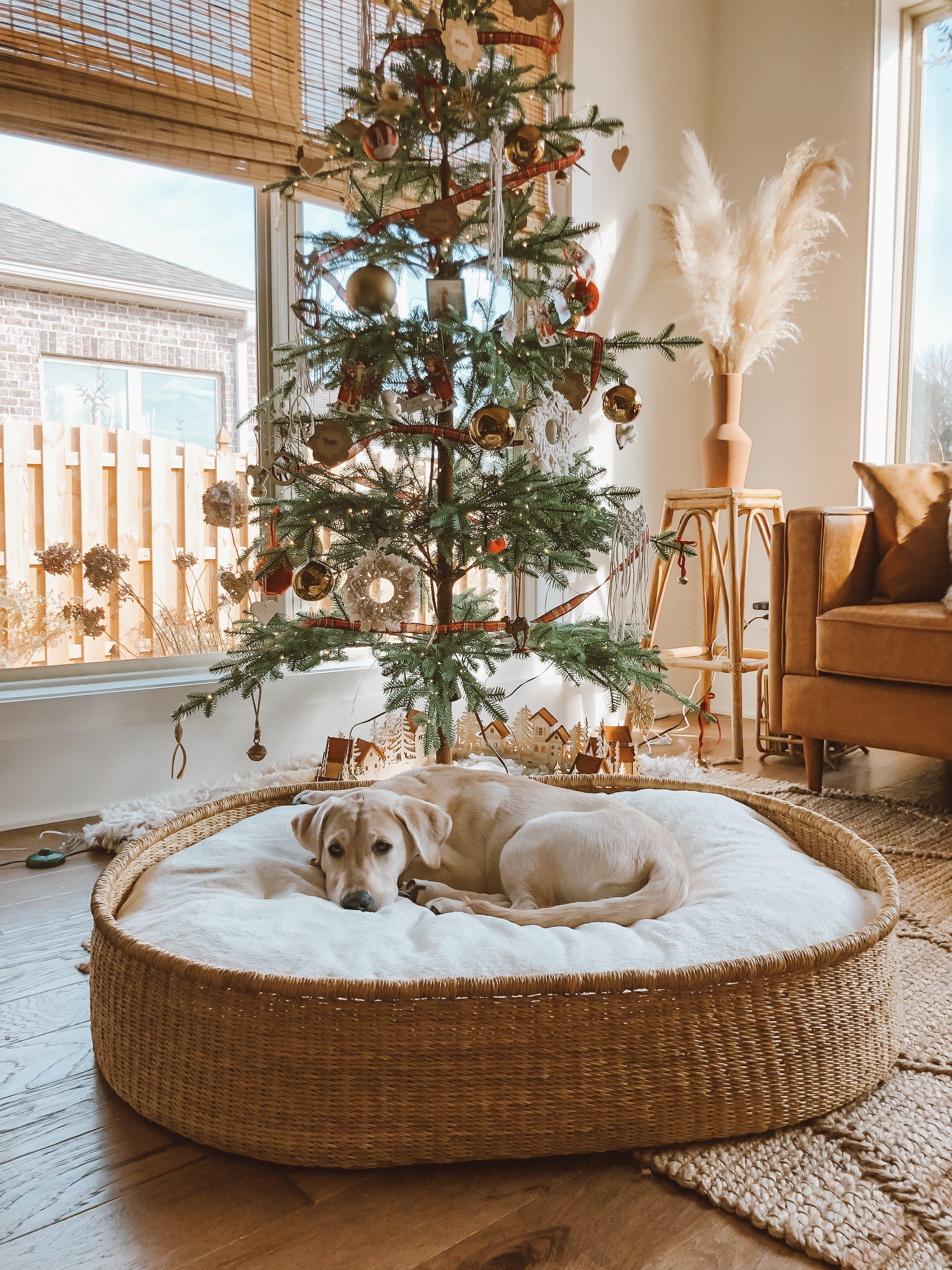 Design Dua in 2020 Dog bed, Basket dog bed, Kid room decor