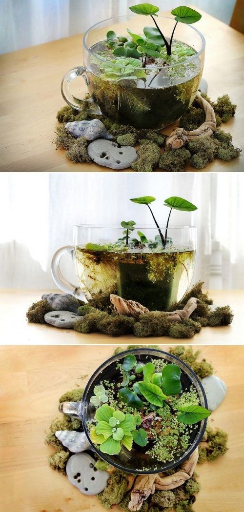 DIY Tabletop Water Garden