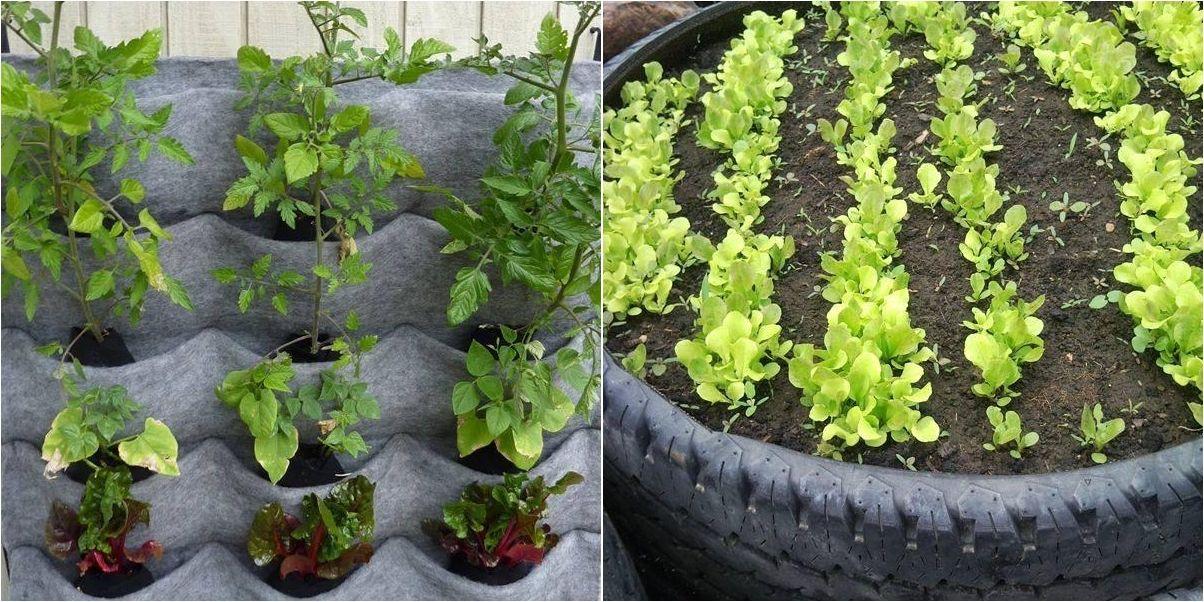 30 Ideas Para Huertos Caseros Huerto Casero Huerto Jardinería En Macetas