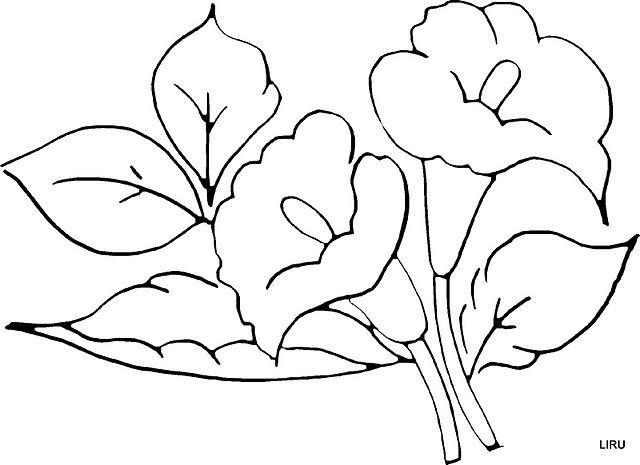 Patrones De Flores Parapintar Imagui