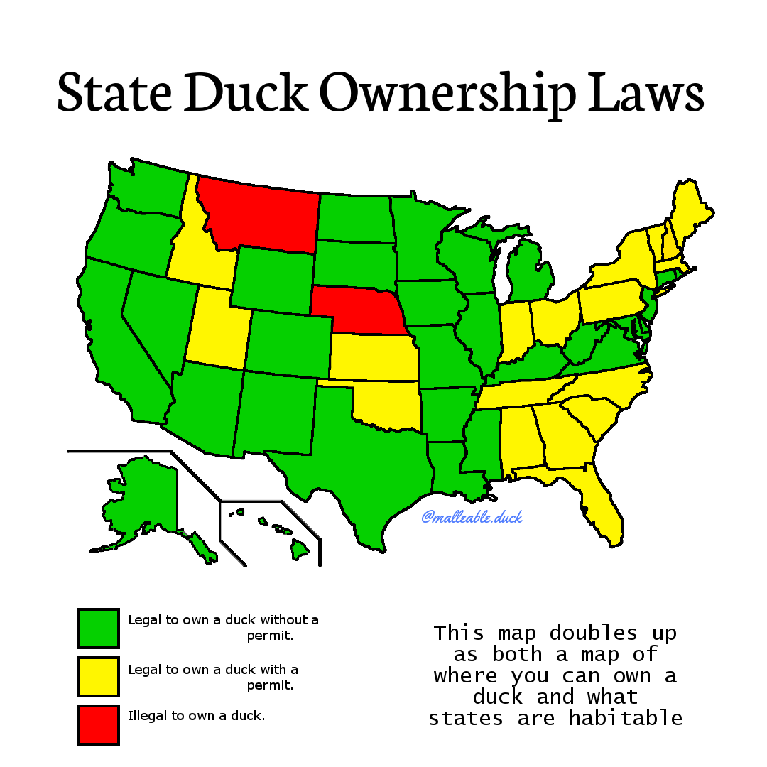 How To Get A Permit To Own A Duck