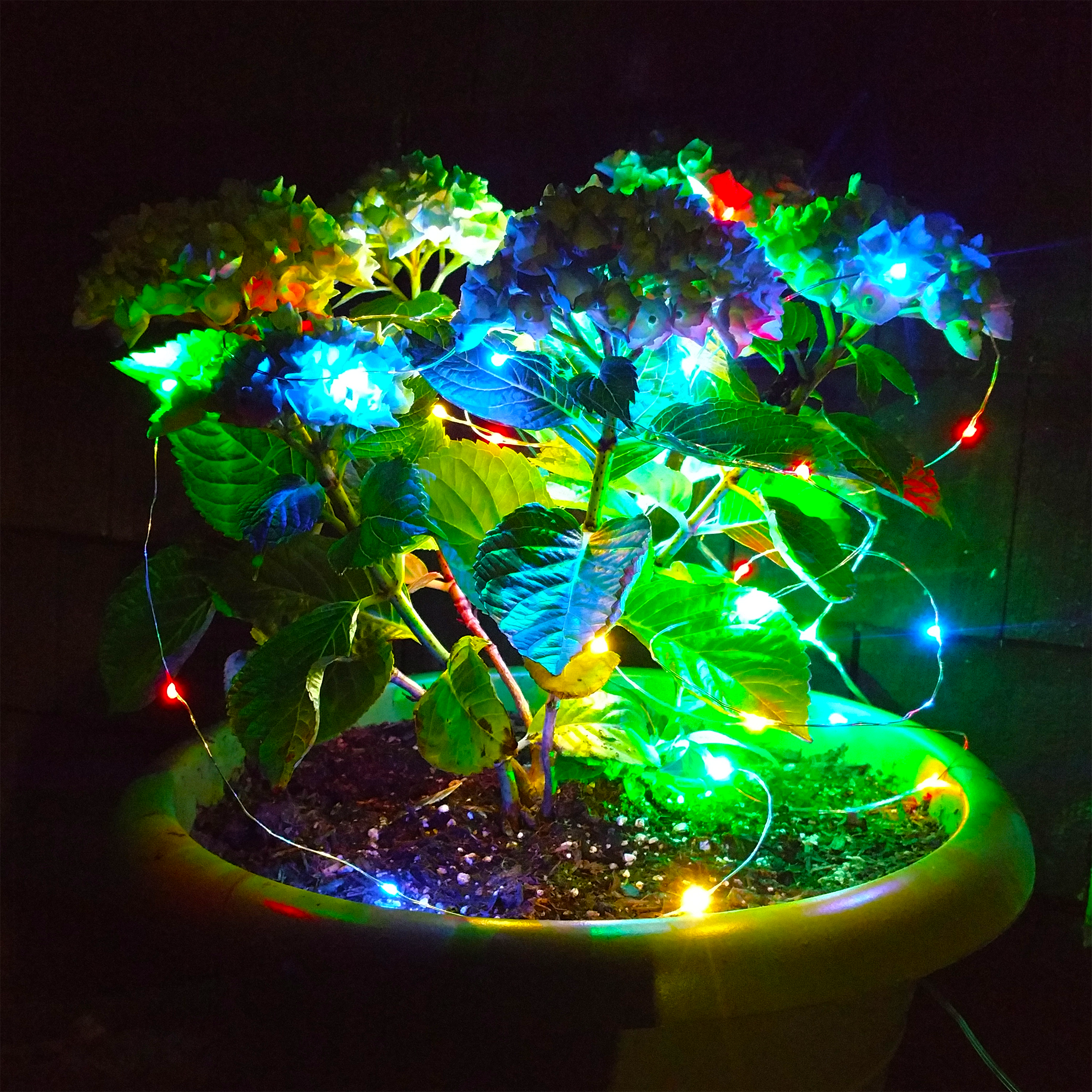 Solar Powered Led Fairy Lights 16 5 Foot Waterproof With 50 Multi Color Micro Led Lights On Silver Wire 8 Modes Hometown Evolution Inc Led Fairy Lights Fairy Lights Led Garden Lights