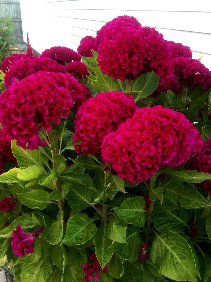 Top 10 Schone Blumen Die Ihren Garten Verwandeln Home In 2020 Beautiful Flowers Flower Landscape Hydrangea Garden