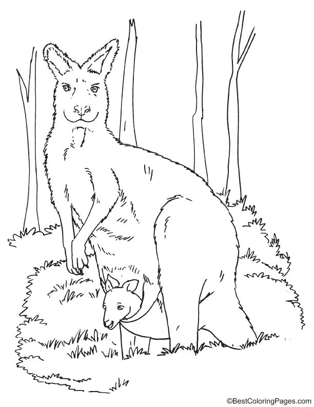 Kangaroo With Joey Coloring Page In 2020 Coloring Pages Coloring Pages For Kids Disney Alphabet