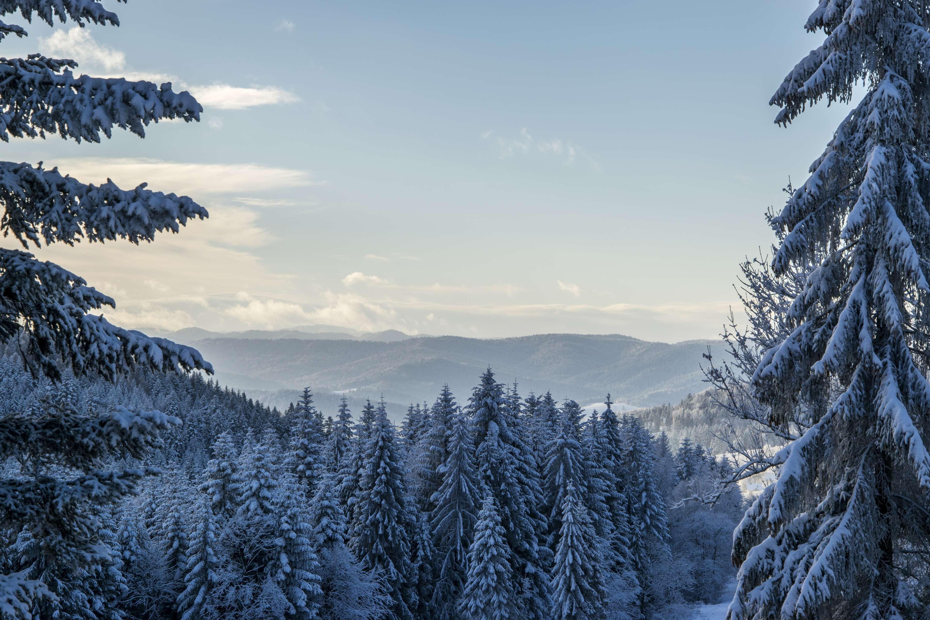 mountains nature pine trees snow winter winter landscape