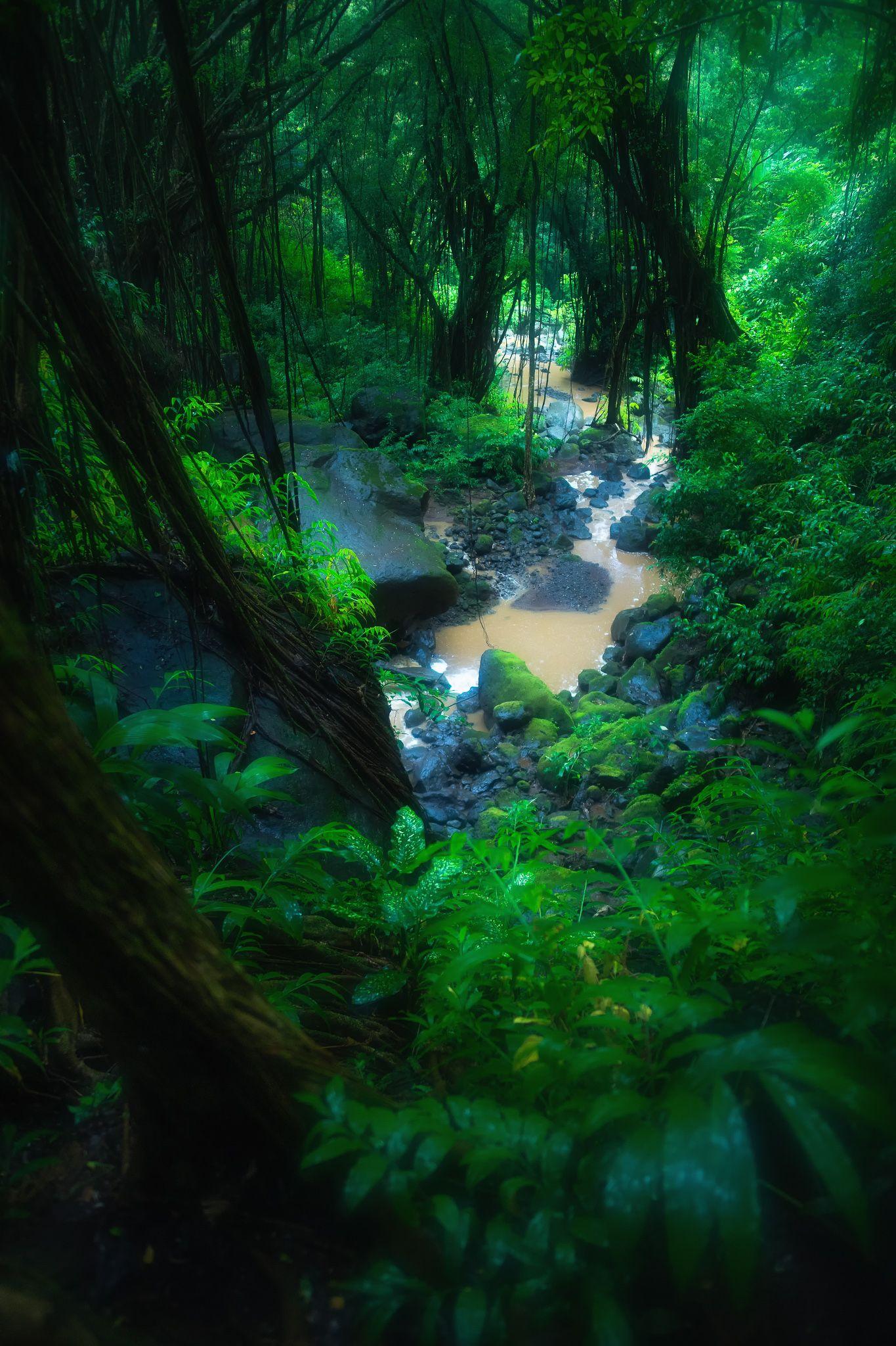 Imgur Post Imgur Rainforest Photography Jungle Photography Rainforest