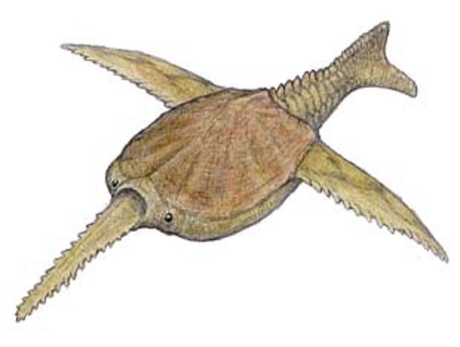 """Art illustration -  Aquatic animals - Doryaspis: was a fish with a shell on the armored head. He had a bone tip with small spines on the sides, like the sawfish. Had huge bony plates in the head protecting it from predators. On the sides had two """"wings"""" bone with the leading edge sawing, and the animal's tail was covered with very hard scales."""