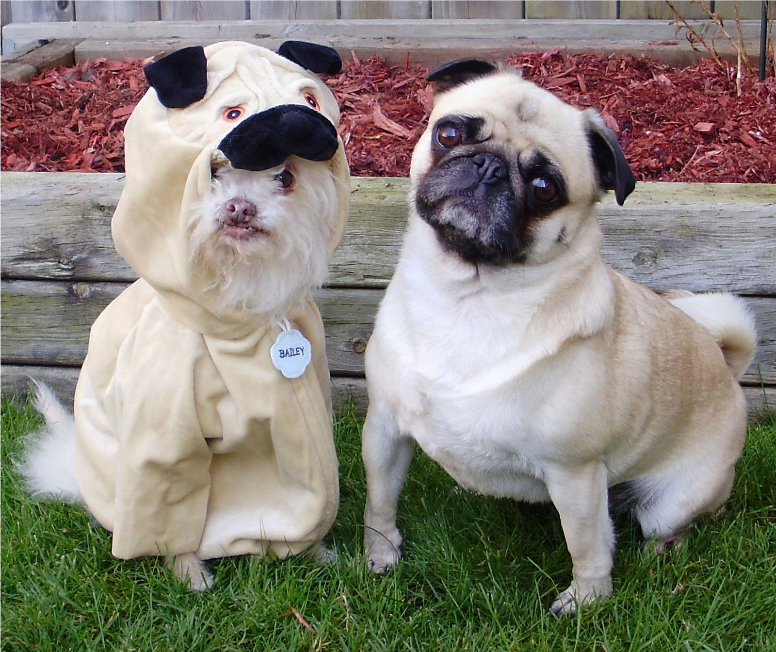 Dress up your pet day - Dress Up Your Pet Day Is Today Here Are 28 Pet Costume Ideas Pet