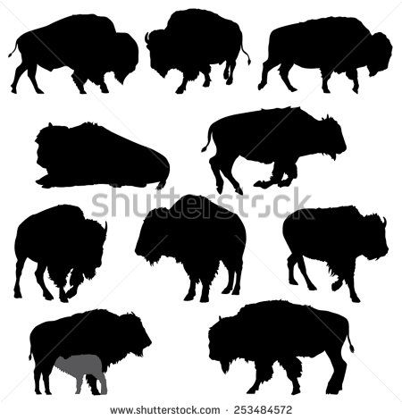 Bison Stock Photos Images & Pictures Shutterstock