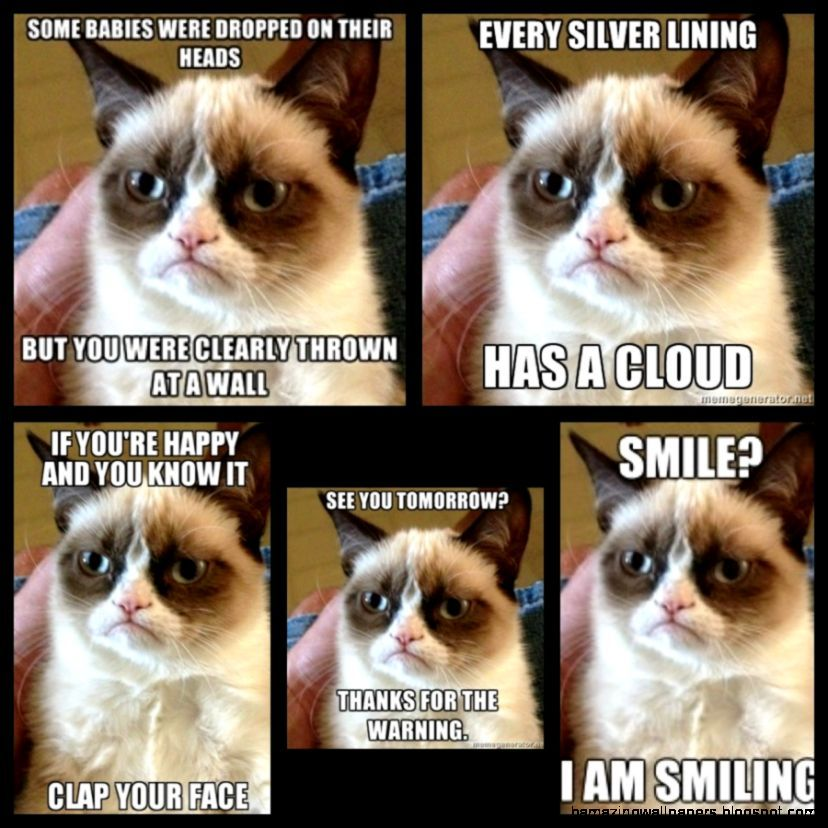 Grumpy Cat Quotes Tumblr
