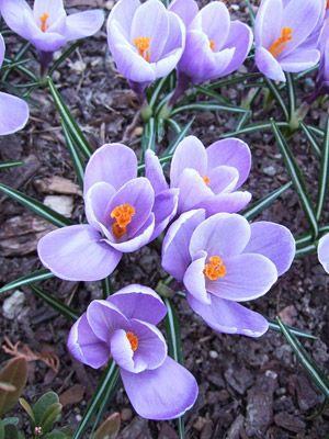 21 spring flowers for your garden gardens plants and flowers 21 spring flowers for your garden mightylinksfo