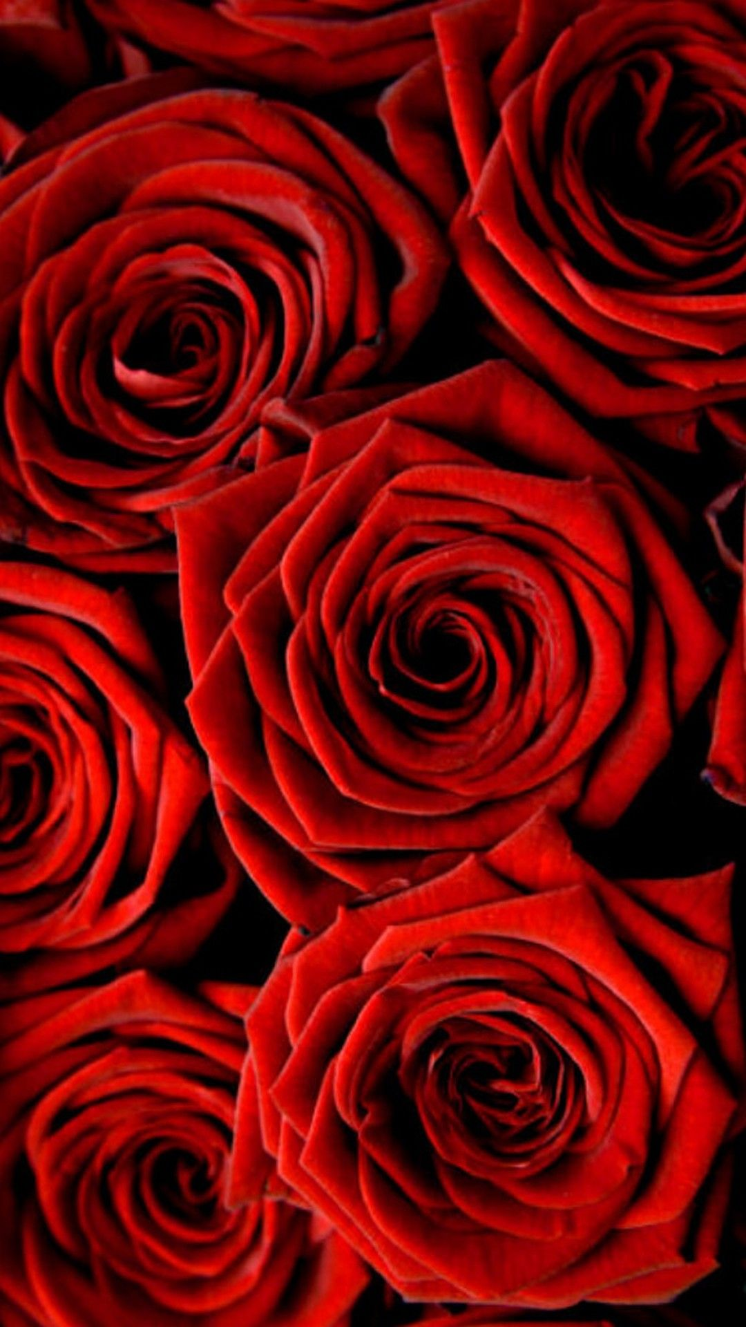 Rose Wallpaper For Iphone With Images Flower Phone Wallpaper