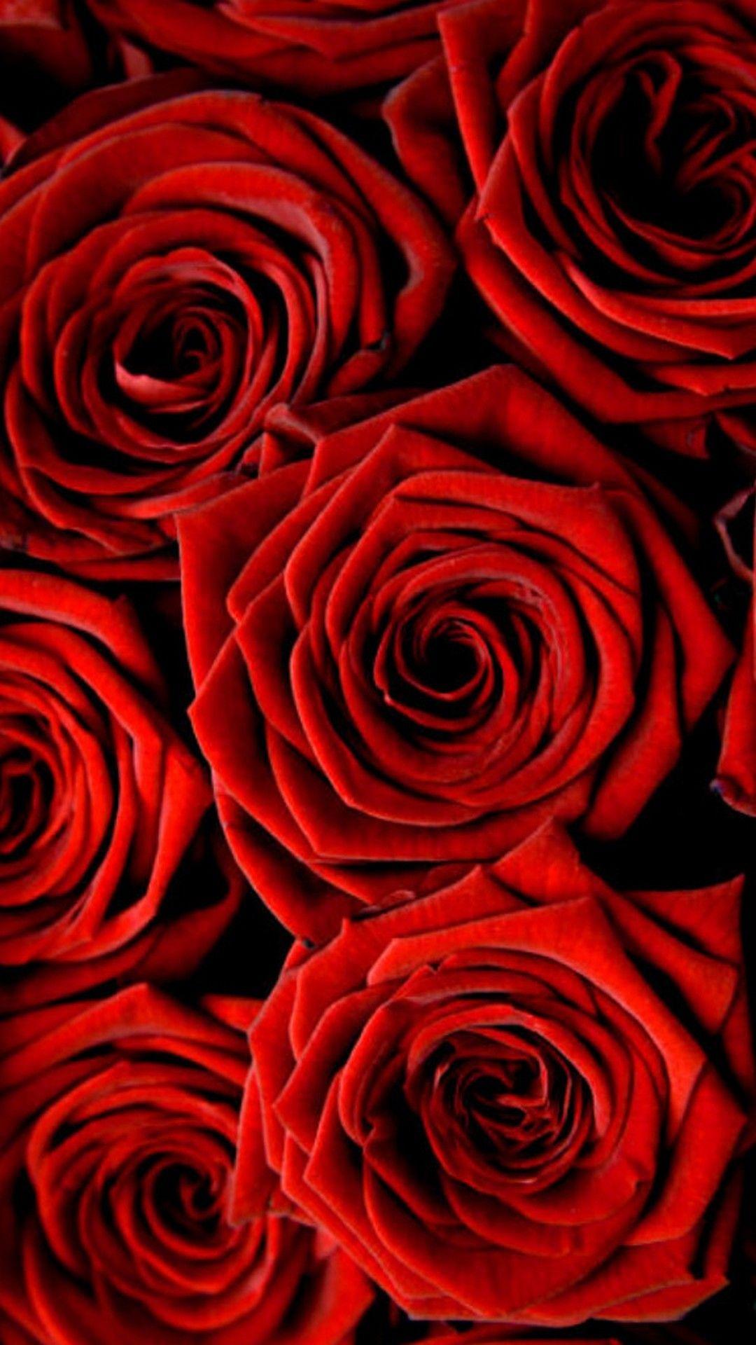 Rose Hd Wallpaper For Iphone Novocom Top