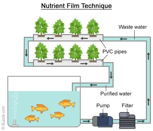 The Surprising Benefits And Types Of Aquaponic Systems