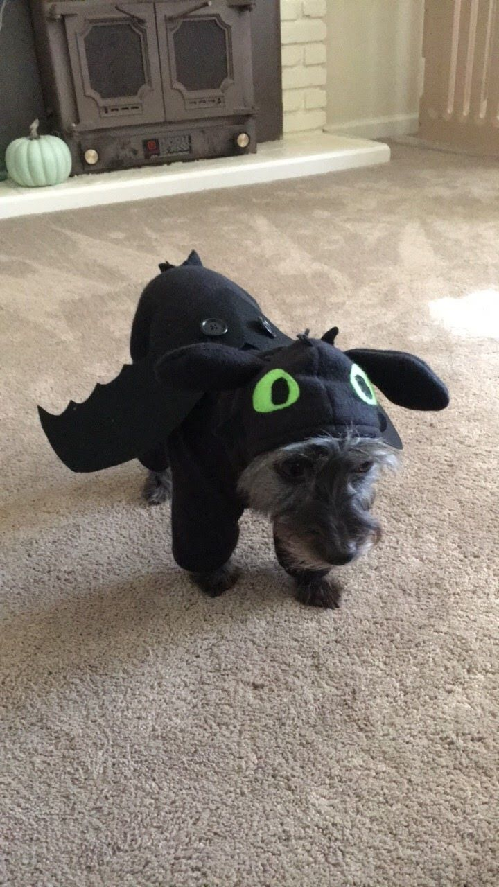 Handmade Toothless How To Train Your Dragon Dog Costume With