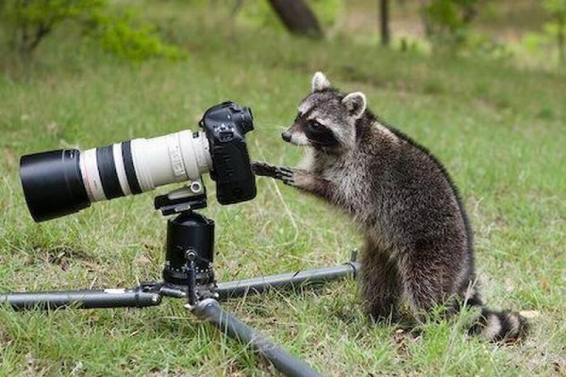 These Adorable Animals Appear to be Taking Photos With a Camera
