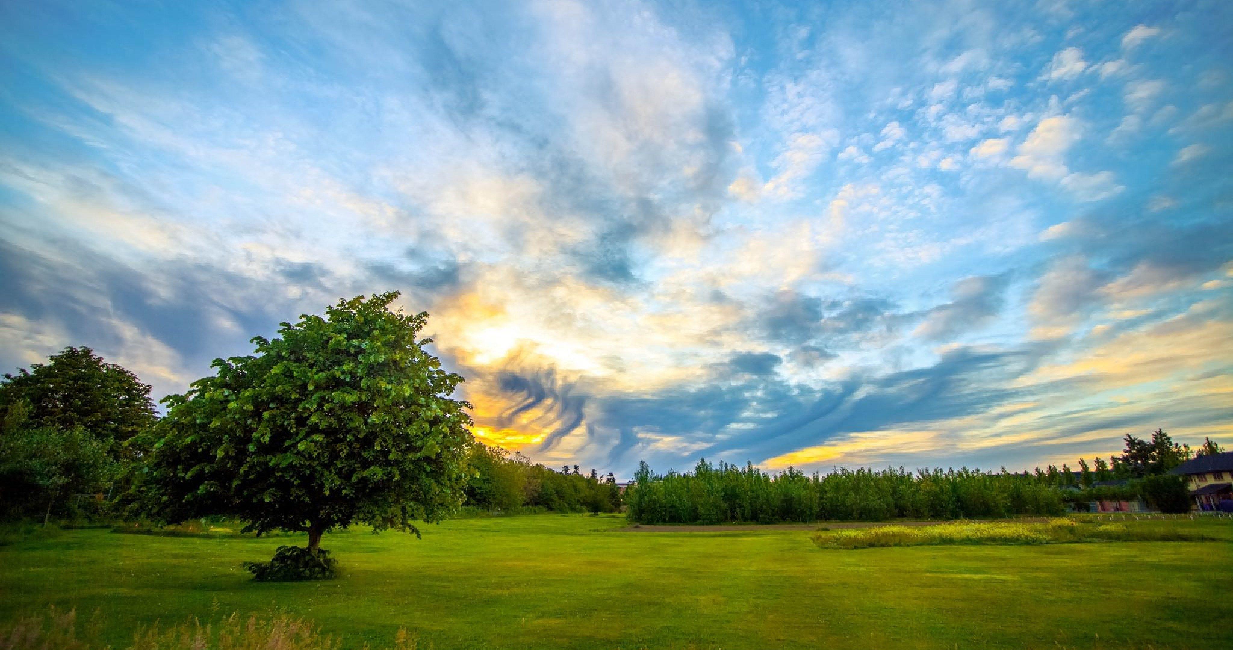 Tree On Meadow 4k Ultra Hd Wallpaper Cloud Wallpaper Wallpaper