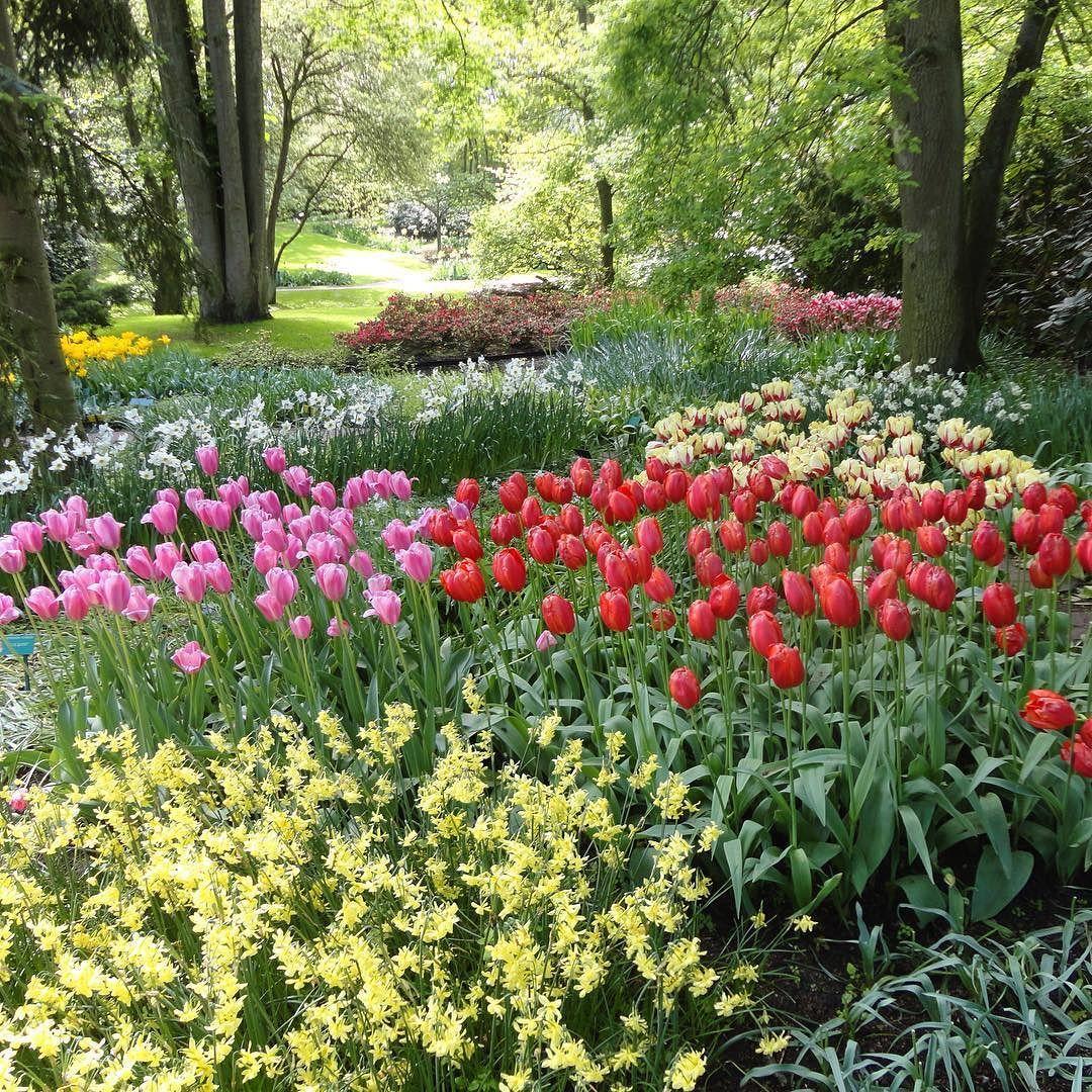 Tulipas remete diretamente à Holanda. E se vc estiver na capital do país durante a primavera não pode deixar de ir até o Keukenhof belíssimo parque de tulipas a cerca de 40 min da cidade e que abre apenas nesta estação do ano! Imperdível! #keukenhof #holanda #holand #netherlands #primavera #spring #tulipa #europa #europe #eurotrip #instatravel #instaeurope #viagem #travel #travelling #turistando #turismo #aroundtheworld #blogdeviagem #travelblog #dicasdeviagem by sala_de_embarque
