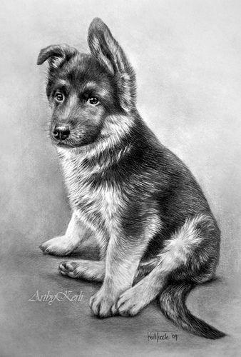 Chiot berger allemand animaux pinterest chiots - Dessin de chien berger allemand ...