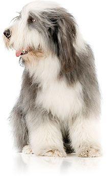 Veterinary Pet Insurance Vpi Dog Insurance Cat Insurance Pet