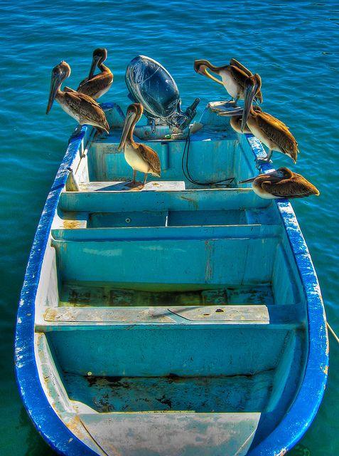 pelican style ~     by rjh.designs, via Flickr