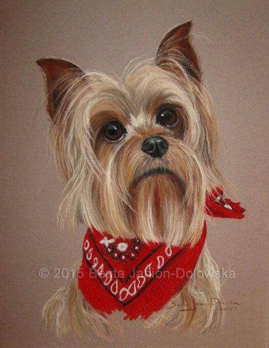 Dog Portrait Yorkshire Terrier York Original Art Pastel Painting