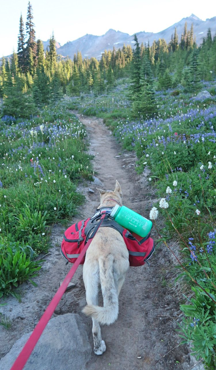 Goat Rocks Wilderness 8 days and 80 Miles on the Pacific