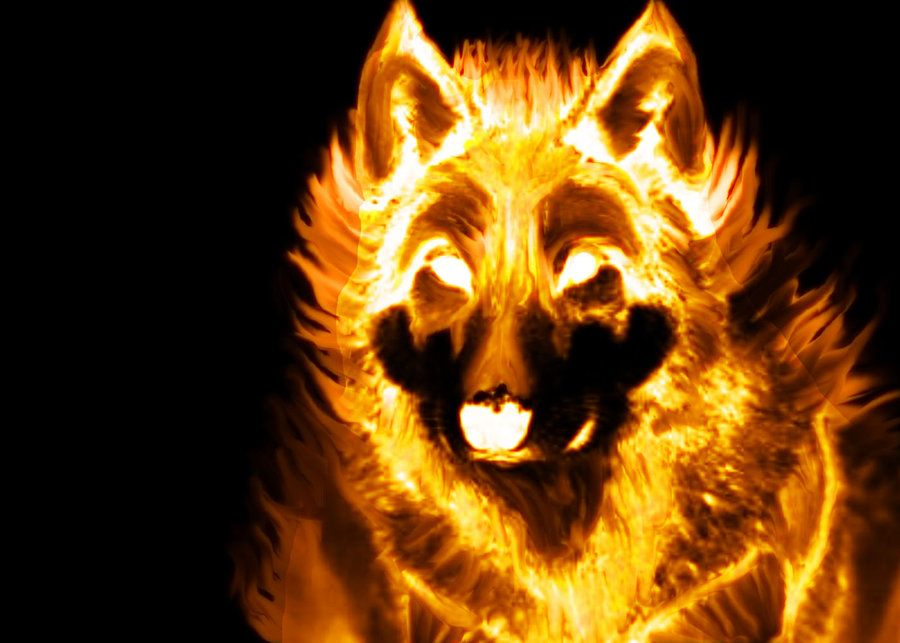 blue fire wolf wallpapers wolf pics fire kinda reflects