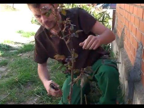 ▶ Cómo podar rosales | facilisimo.com - YouTube