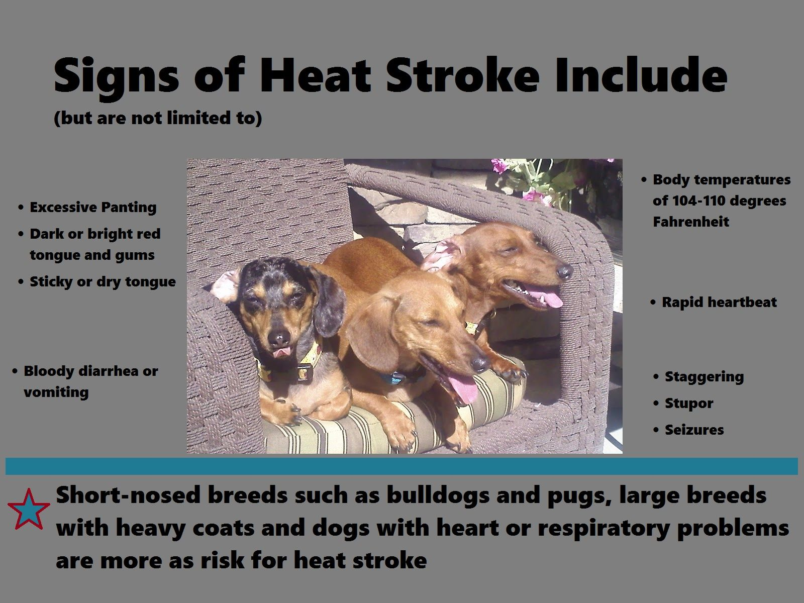 How To Protect Your Pet From Hot Weather Heat Stroke In Dogs And Cats Heat Stroke In Dogs Dogs Dog Cat