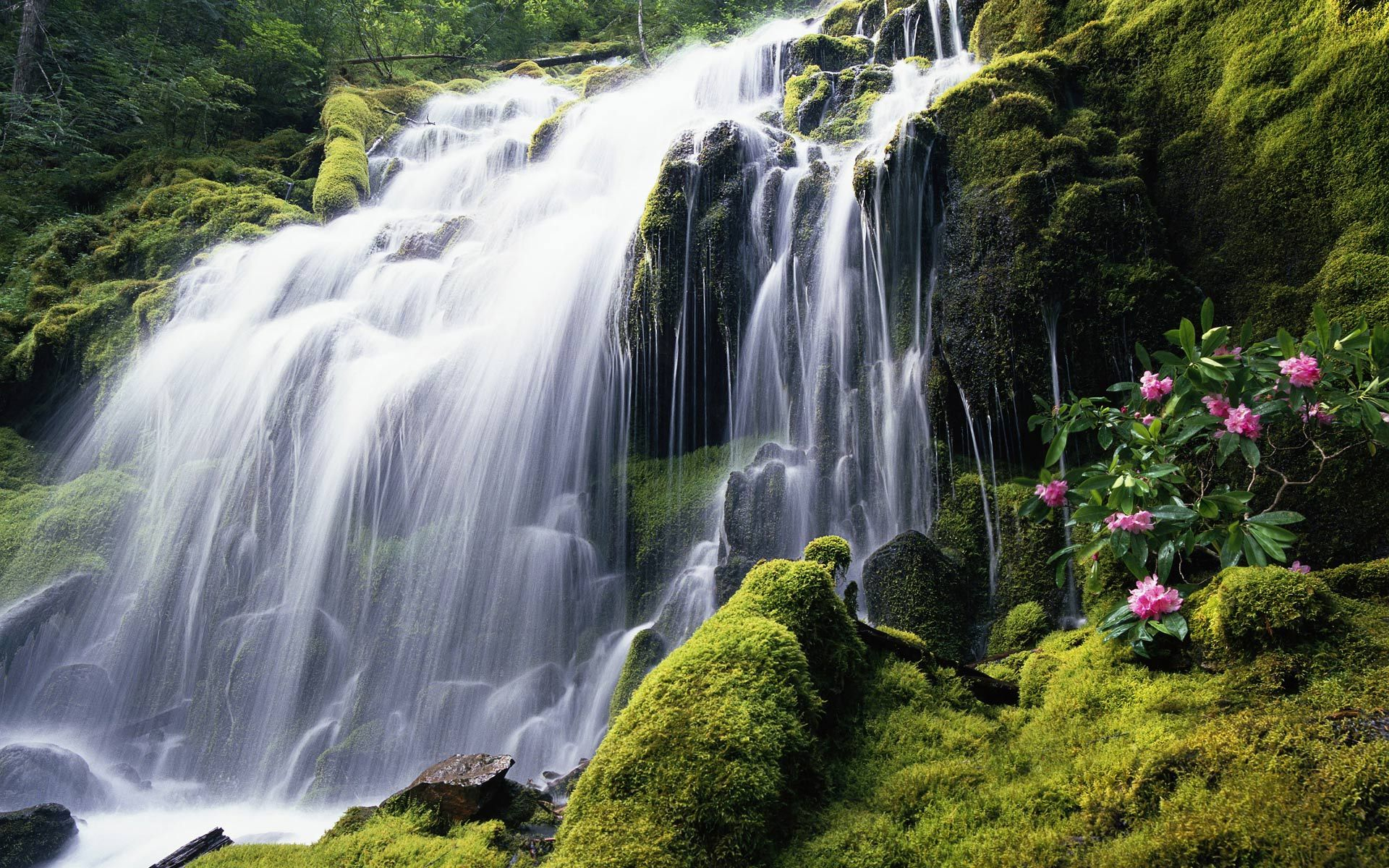 A Spring Waterfall Mother nature