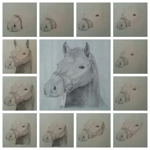 Step by step horse pencil drawing
