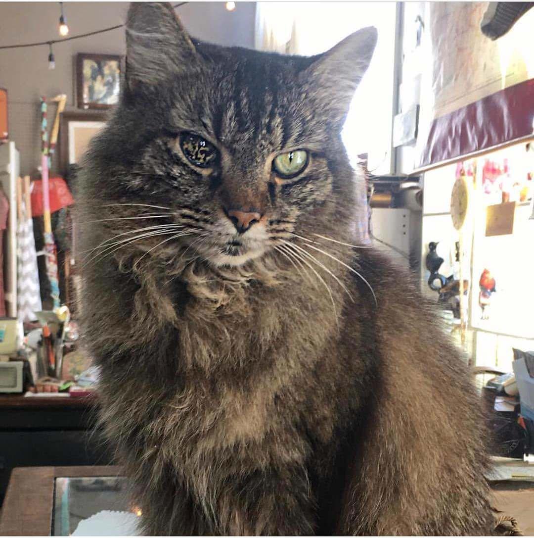 This cat with a strange eye http//ift.tt/2AlSKFD Katzen