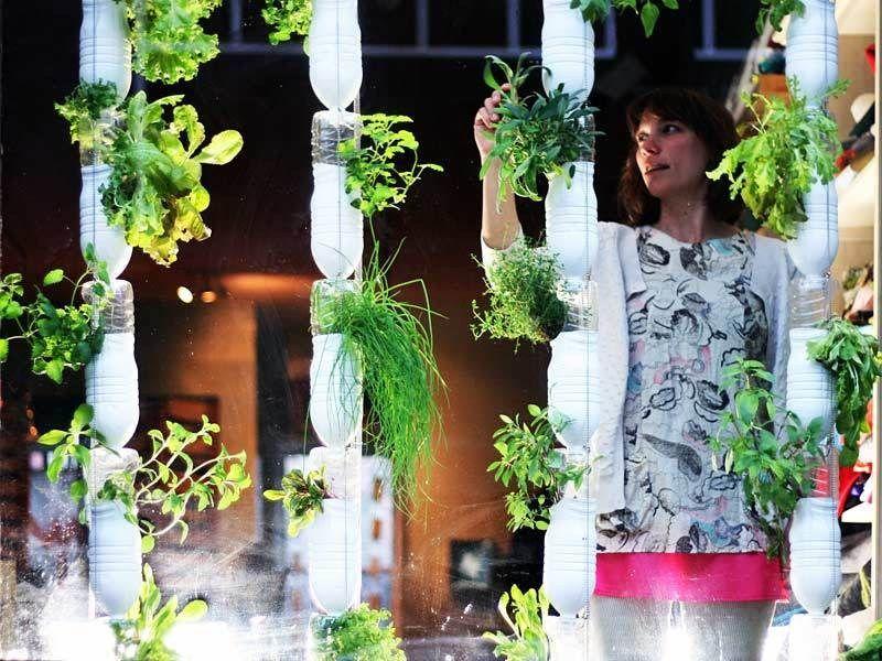britta riley voulait cultiver sa propre nourriture dans. Black Bedroom Furniture Sets. Home Design Ideas