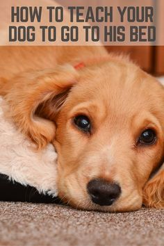 How To Teach A Dog To Go To Her Bed 4 Steps That Mutt Tips For