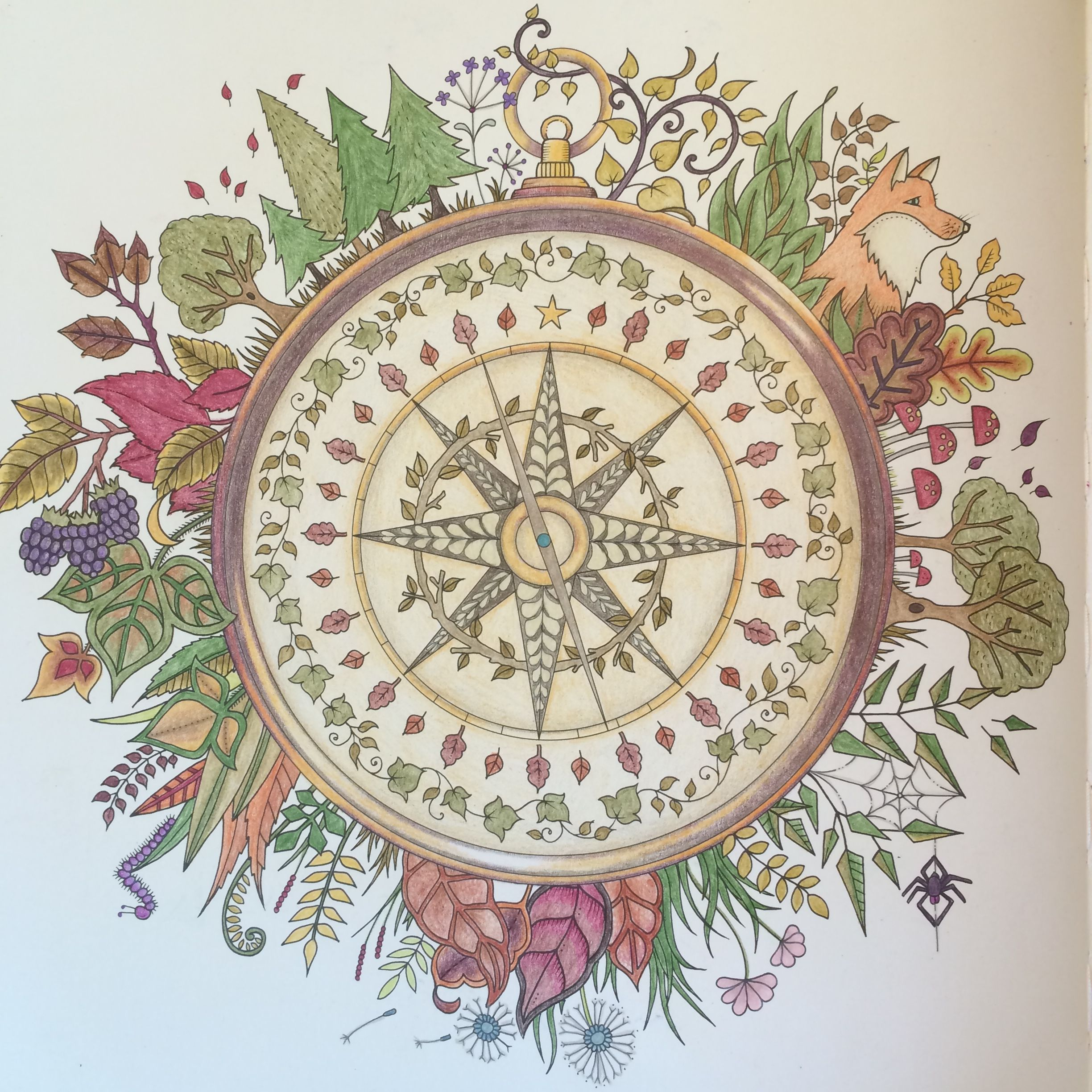 Johanna Basford Enchanted Forest Compass Done With Prismacolor Pencils The Coloring Book