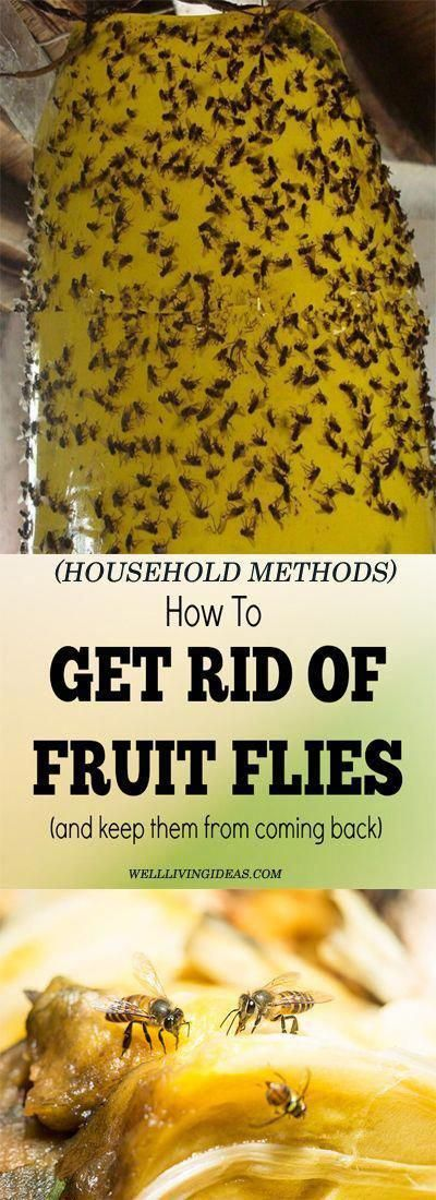 10 Best Household Ways to Getting Rid of Fruit Fly