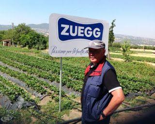 Il Capitalista.com: Investimenti positivi: Zuegg è Ok