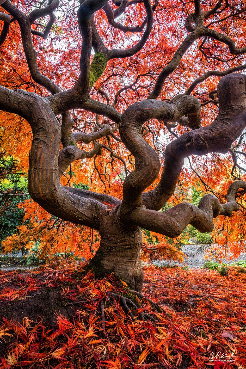 Kubota Garden - Seattle, WA | Trees | Pinterest | Kraken and Seattle