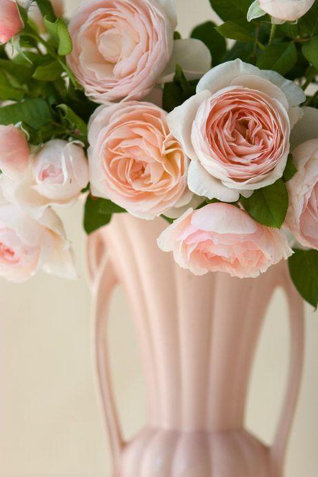 http://lacarolita.tumblr.com/post/80075973809   Roses   Pinterest ...