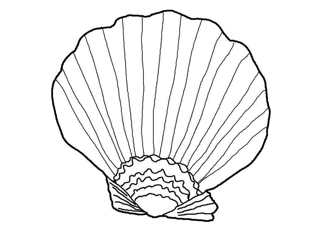 Free Printable Seashell Coloring Page