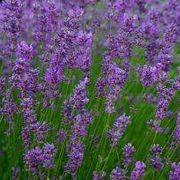 How to Design a Perennial Herb Garden   eHow