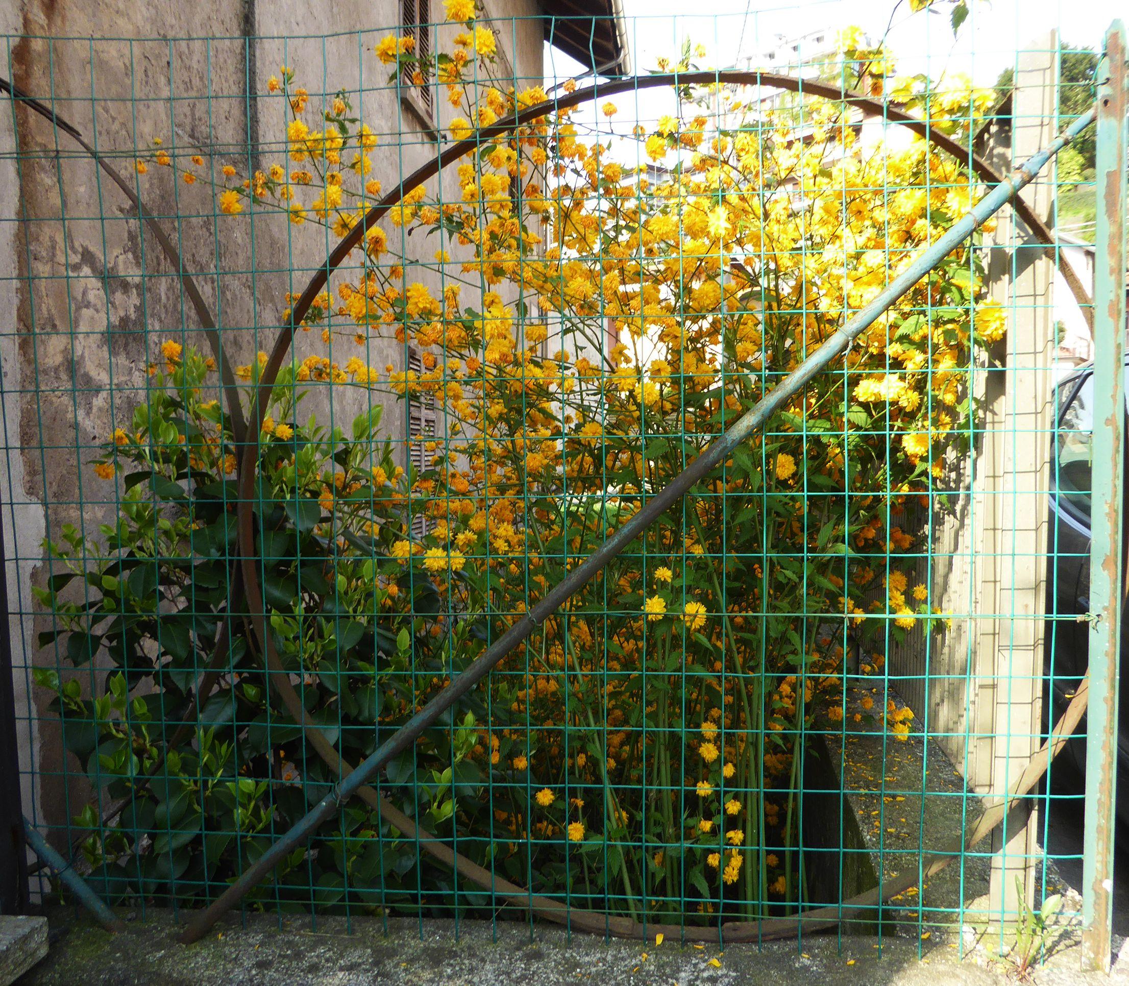 Pin On Botanica Piante E Fiori