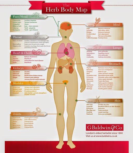 Global Health The Herb Body Map Healthy Detox