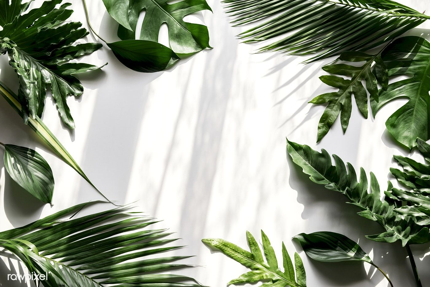 Tropical Green Leaves On White Background Premium Image By Rawpixel Com White Background Plant Wallpaper White Background Photo Tropics jungle tropical rainforest, green coconut leaves, watercolor leaves, leaf, plant stem png. tropical green leaves on white