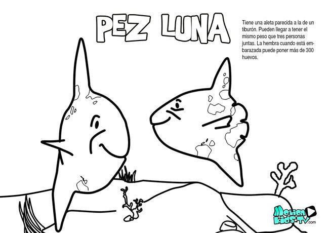 Pez luna, dibujos colorear peces. Recursos educativos animales ...