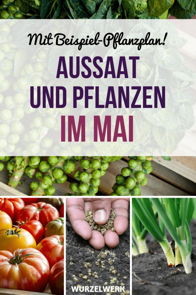 Aussaat & Pflanzen im Mai + Pflanzplan zum Ausdrucken - Wurzelwerk