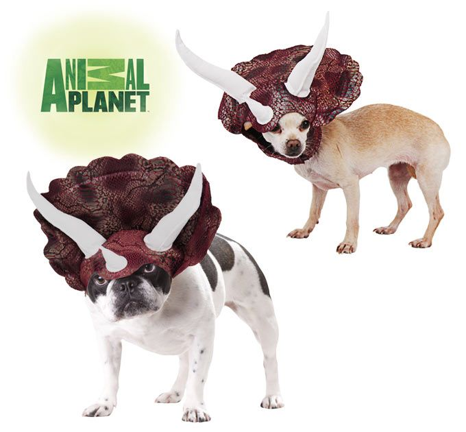 Iu0027m turning my dogs into dinosaurs //theanimalrescuesite.greatergood.com/store/ars/item/50160/animal-planet- triceratops-pet-costume?sourceu003d4-2832-39#  sc 1 st  Pinterest & Animal Planet™ Triceratops Pet Costume | Pet costumes Animal Rescue ...