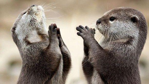 カワウソを学ぼう カワウソに関する12の面白事実 カラパイア カワウソ 動物 かわうその赤ちゃん