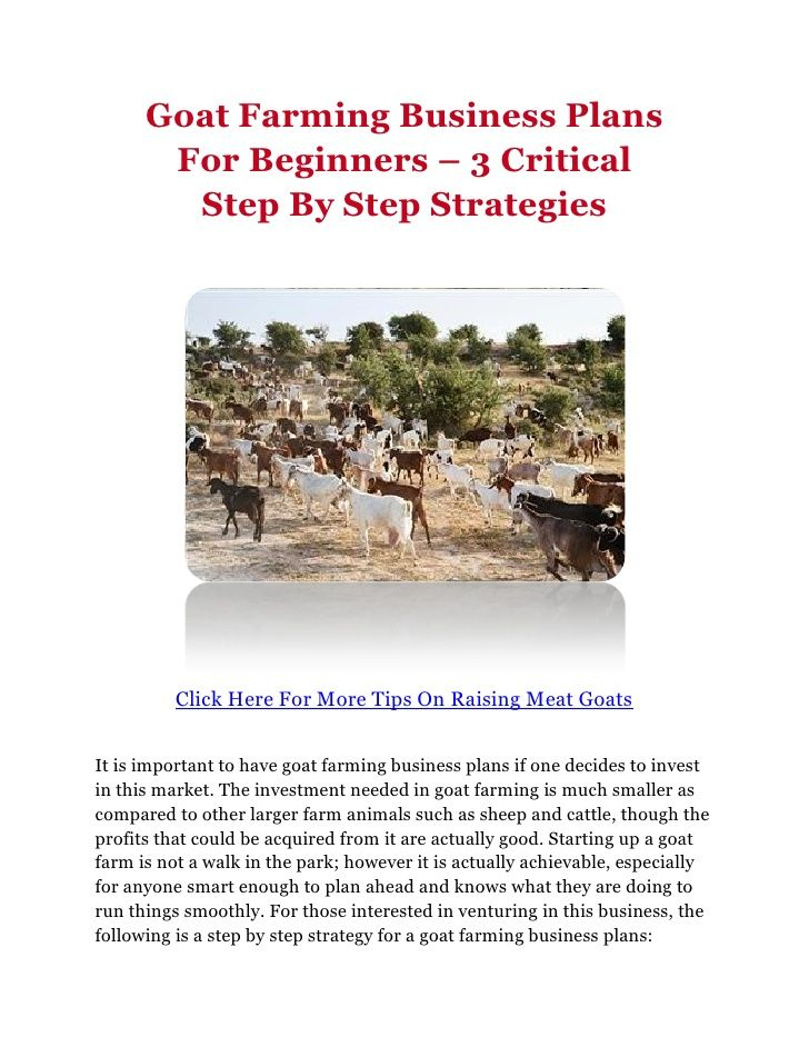 Goat Farming Business Plans For Beginners   Critical Step By